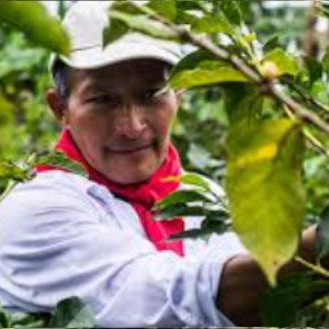 Exportacion de  cafe colombiano a europa
